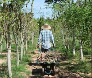 Moringa seeds gives many Moringa possibilities