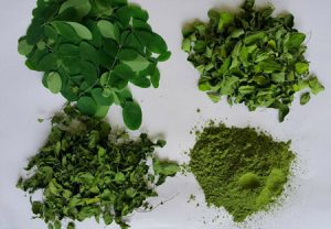 Benefits of Organic Moringa Powder from Cambodia.