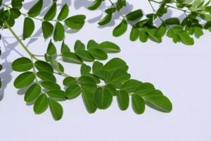 Moringa Benefits Your Health