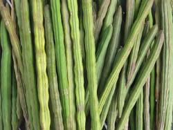 Moringa Pods/Seeds Baca-Villa