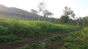 Baca-Organic-Moringa-Fram