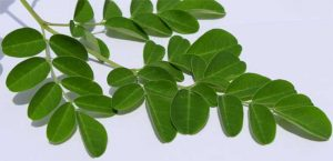 Moringa's Credentials