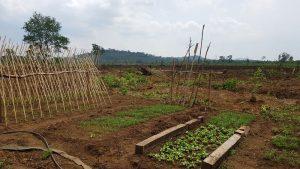 all-kind-of-Vegetables-garden