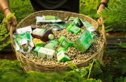 Baca-Villa-Organic-Moringa-Products